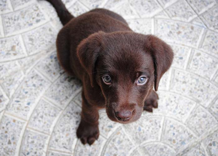 pet odors before professional carpet cleaning